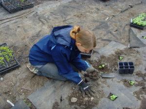 Wwooferin Nina bei der Gartenarbeit im Gewächshaus