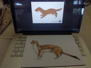 Illustrationen für Archipelagos anfertigen