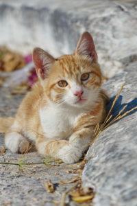 Fotoparade Die schönsten Urlaubsfotos Tierisch