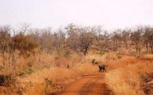 Ein Affe in Afrika