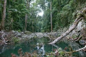 Gwongoorool Pool im Lamington Nationalpark in Australien