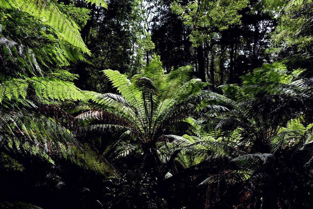 Regenwald in Australien