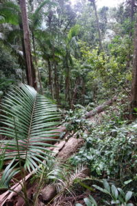 Der Urwald Australiens.