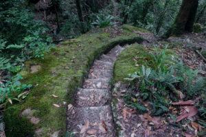 Ein Wanderweg mitten im Urwald des Lamington Nationalparks.