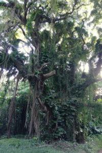 Urwaldartiger Baum