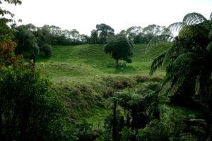 Natur auf der Nordinsel Neuseelands