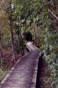 Point England Walkway Auckland Halbtageswanderung