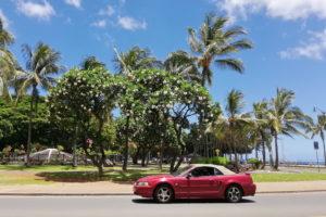Fortbewegung auf der Insel Oahu in Hawaii auch mit öffentlichen Verkehrsmitteln