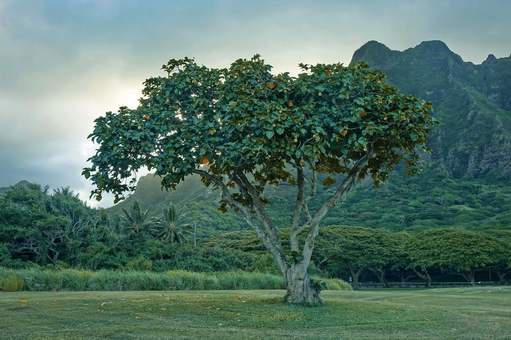 Hawaii Oahu Jurrasic Park Drehort
