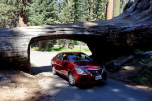 Tunnel Log mit Auto durch Baum fahren Sequoia Nationalpark