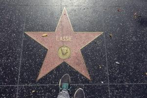 Walk of Fame - lohnt sich die USA?