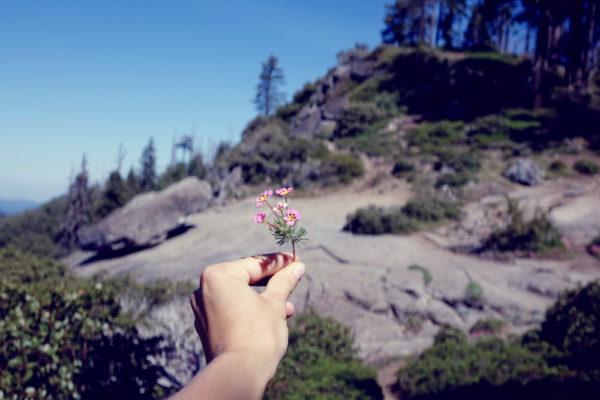 Der Gewinner des Yosemite Sequoia Vergleichs ist der Sequoia Nationalpark