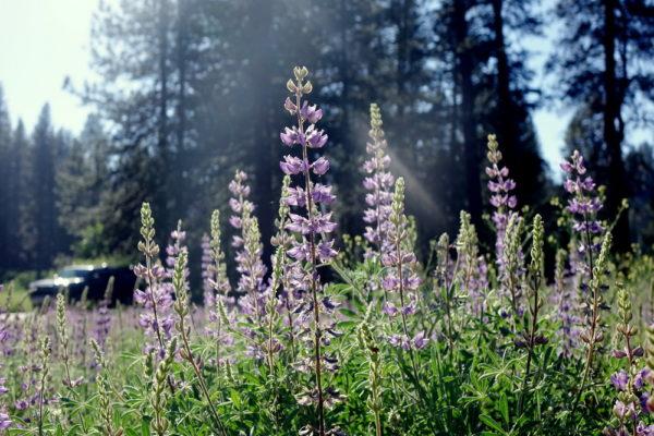 Klima und beste Reisezeit im Yosemite Nationalpark